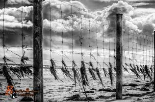 Seaweed Fence