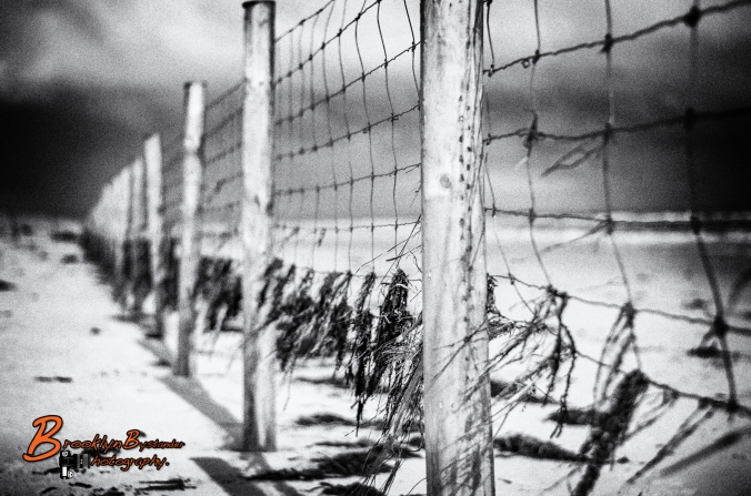 Beach Fence Black & White
