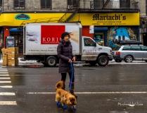 NYC Dog Walking
