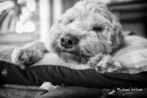 Millie Pillow